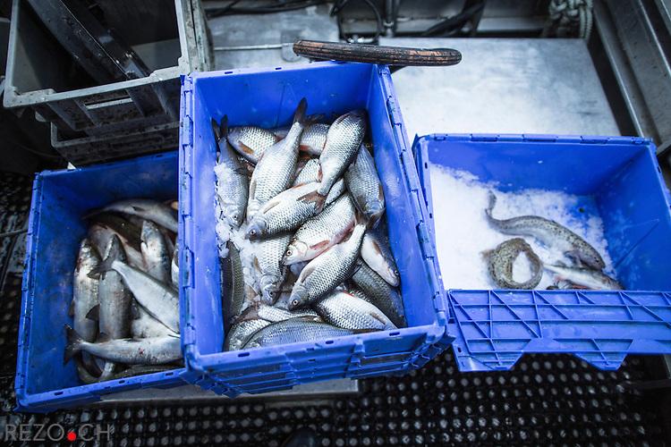 Pêche sur le lac Léman